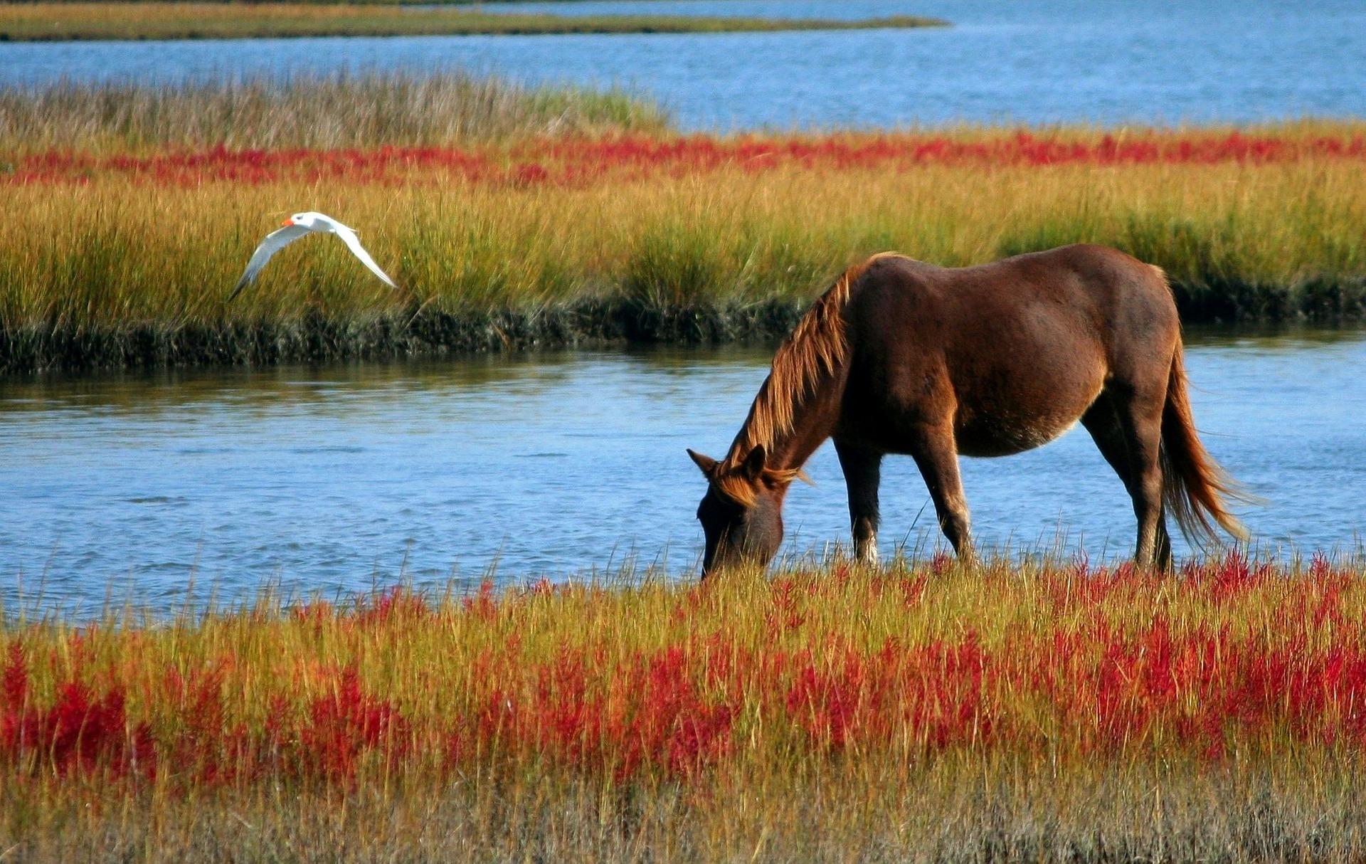 Jeździectwo konne to wspaniała przygoda dla dzieci i dorosłych!