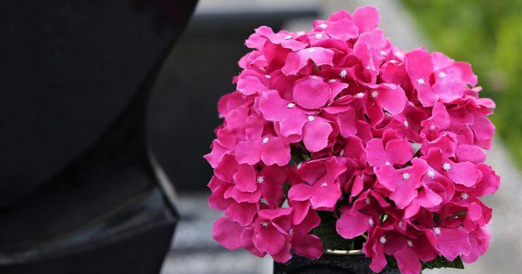 Sztuczne kwiaty – jakie są zalety ich zakupu i kiedy się na niego zdecydować?