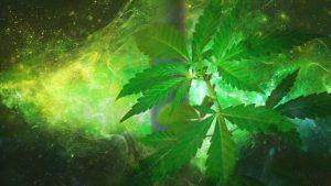 Marihuana lecznicza - jak działa