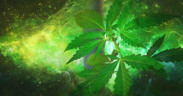 Marihuana lecznicza – jak działa